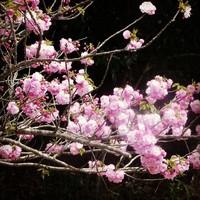 VSガイナーレ鳥取 2013/04/05 23:01:31