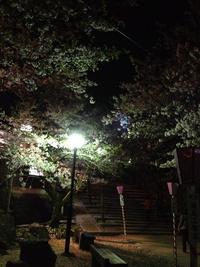 大村公園・夜桜2013