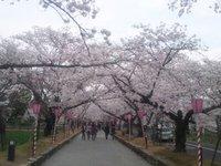 桜は満開・お腹は満腹
