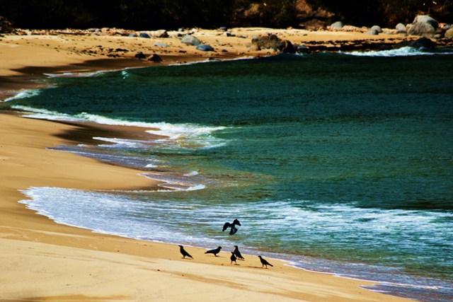 海を放浪する理由(わけ)