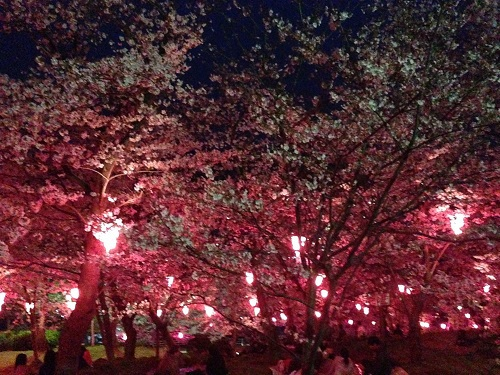 立山公園の夜桜見聞録