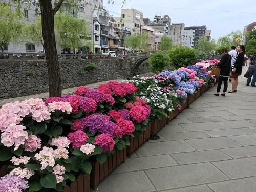 長崎紫陽花祭り開催中!