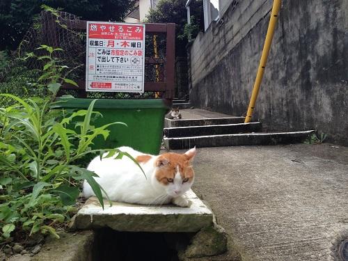 長崎猫 夏バテかな