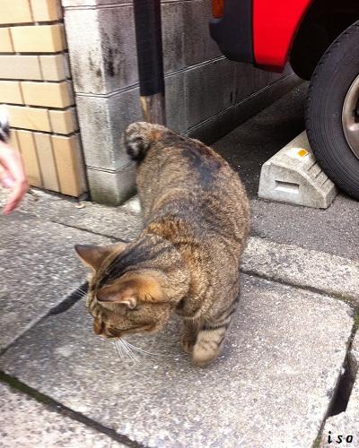 尾曲がり猫