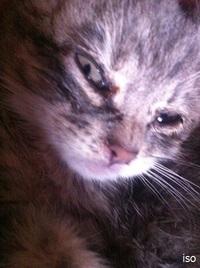 5日間の仔猫「ココ」