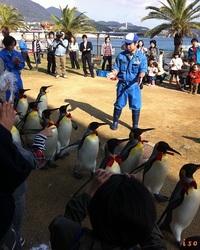 長崎ペンギン水族館を愛する事2