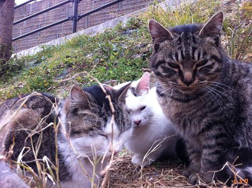 今を生きる猫たち