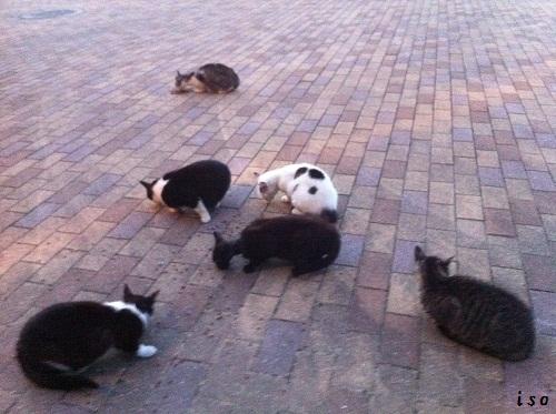 猫トライアングル