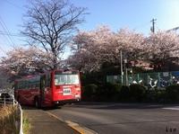 長崎「立山公園」で花見 1