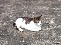 長崎ねこ 至高の輝きを放つ猫