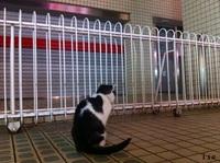 長崎ねこ 都市猫伝説
