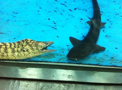 長崎ペンギン水族館へ行こう 2