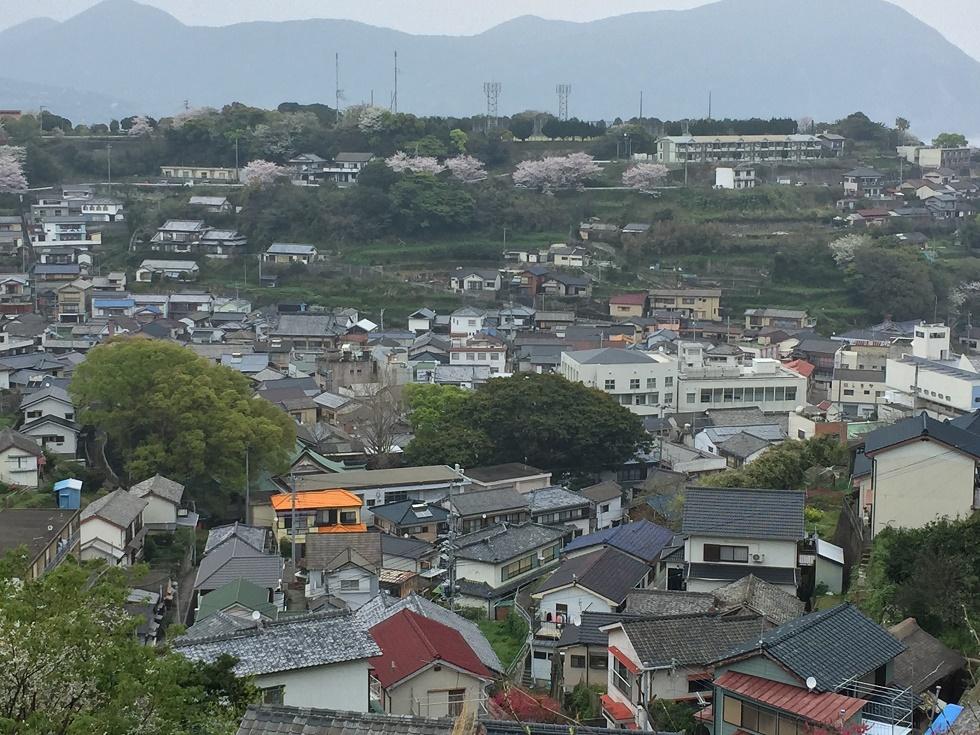 長崎五島列島 奈良尾のサクラ