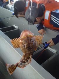 アラカブ釣り 神の浦グラスボート