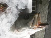 今朝の長崎魚市