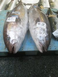 長崎魚市 今日の魚です