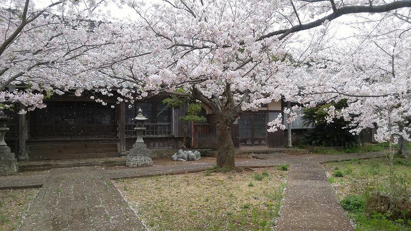 桜が満開!!笑顔満開!気分も上々♪