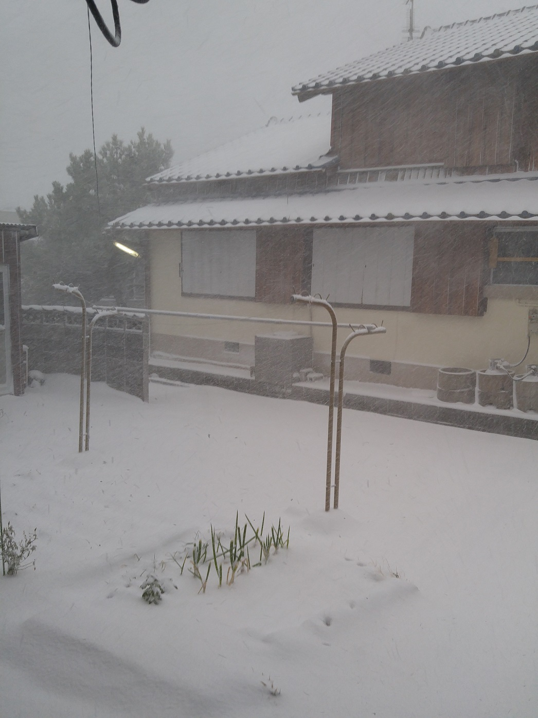 南の島で数十年ぶりの大雪!?