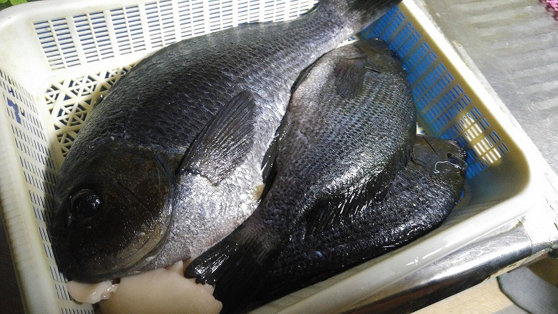 釣った魚で刺身&鍋飲み会☆