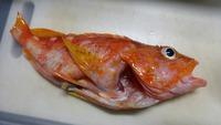 いただきもののお魚で夕飯は0円食堂!