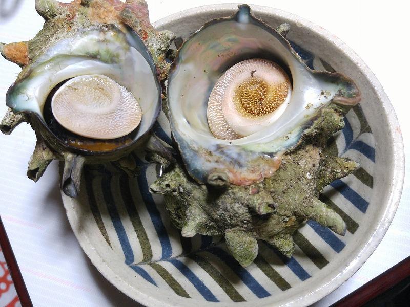 イサキとサザエ料理で美味しい家飲み!!