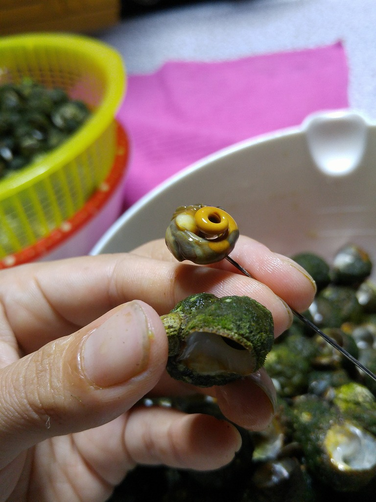 小値賀の自然の恵み。ミナ貝!