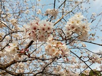ようやく島にも春がやってきた!!