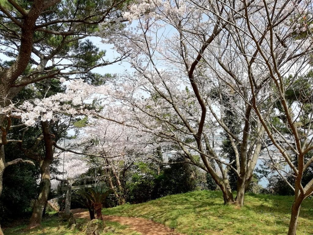 桜満開!!お気に入りスポット!
