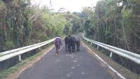島と牛とお母さんと。こんな日常の風景がいい。