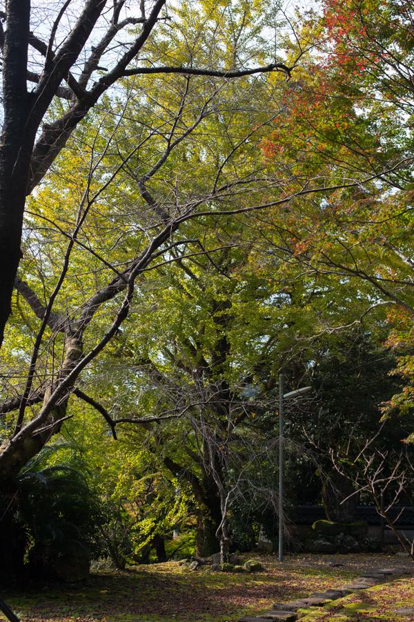 まだ早かった、七面山の紅葉 2015