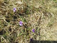 宇久島の春