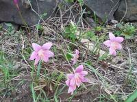 今日朝綺麗な花見つけ