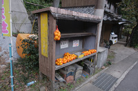 長崎 紅葉 路線バスで行く滝の観音