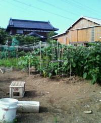 我が家の菜畑