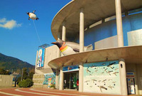 長崎県「ペンギン水族館」ってどんなとこ?
