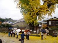 この秋はとっても有田が面白いですよ 長崎のおばやん発信!