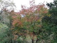 諌早の紅葉