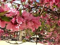 昨日の長崎市内 春の気配がきています。
