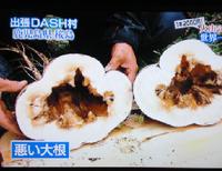 成長のバランスを崩し、空洞化した桜島大根(出張DASH村)