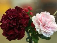 今週のお花が届きました。