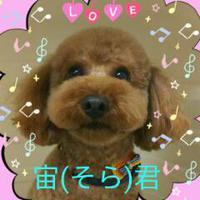 (*^▽^)/★*☆♪