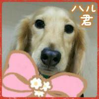(*^▽^)/★*☆U^ェ^U