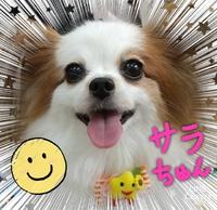 ☆今週のお休み☆